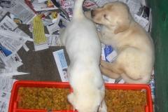 puppies-002_0