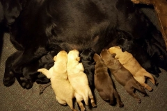 pups_5days_0